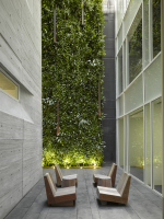 Зеленые стены за белым фасадом