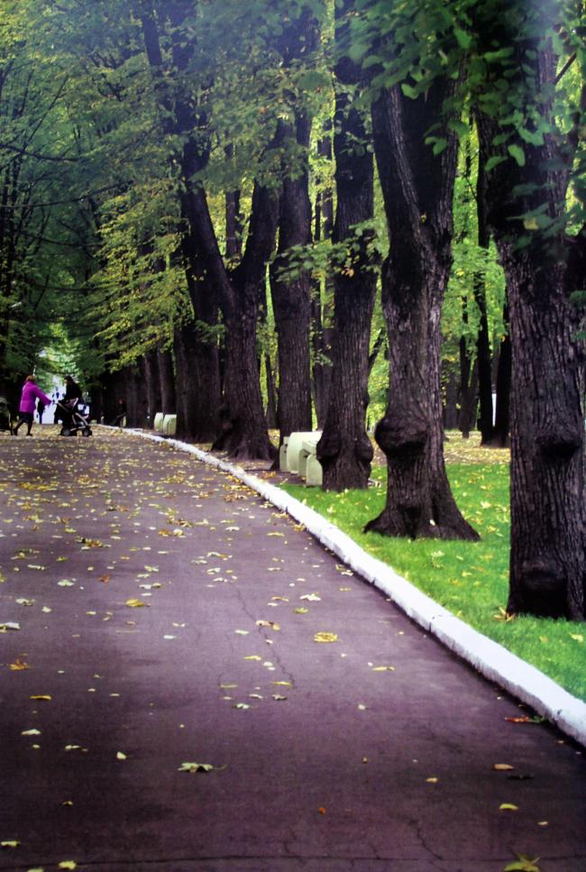 Лефортовский парк сегодня. Материалы из Атласа Лефортовского парка