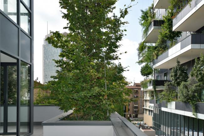 Фото | Зеленые деревья на балконе Bosco Verticale