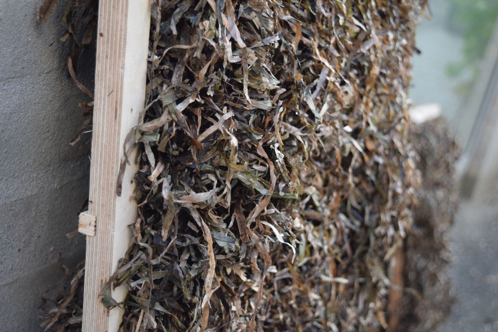 Проект «Архитектура из морских водорослей» / Seaweed Architecture<br>Фотография © Kathryn Larsen