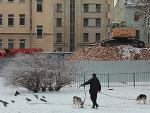 Работы – выше крыши. Старый Петербург ломают с размахом