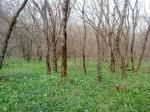Под топором уже и Таманский лес