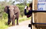 В Мневниках могут открыть парк зверей, списанных из цирка