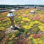 Трава на доме. Столичные власти вернулись к идее озеленения крыш