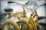 Если в Петербурге не построят велодорожки, креативный класс сбежит