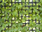 Слепые стены зданий превратятся в висячие сады и вертикальные парковки