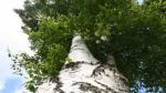 В «Зарядье» не разрешат сажать экзотические деревья