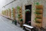 Разбиваем вертикальные сады
