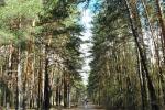 Депутаты потребовали от мэра наложить мораторий на застройку новосибирских парков