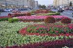 Елена Штиглиц: «Тюльпаны в городе уже рвать перестали»