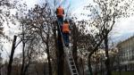 В Москве посчитают все деревья