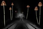 Жители Канска захотели построить в городе фонари-грибы и фонтан-герб