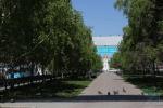Аллея на Красном проспекте включена в список зеленых зон