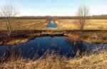 Кондакопшинское болото просят спасти от застройки