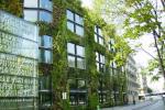 Зелёные фасады: как обеспечить их буйство