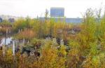 Что делать с Охтинским мысом, который «зарастает лесом»