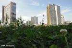В Петербурге запретят строить небоскребы, но разрешат сажать траву на крыше