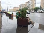 Озеленение Москвы - это коррупция. Четвертый раз меняют деревья в кадках на Проспекте мира