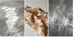 Архитектурная топология и феномен биомимикрии
