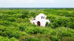 Архитектура: Мексиканский отель на дереве