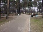 """Московские власти выделили 71 миллион на благоустройство парка """"Сосенки"""", несмотря на отсутствие проекта и сметы"""