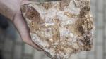 В Полоцке найден древнерусский архитектурный чертеж XII века?