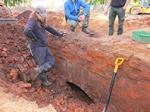 В Новгородской области археологи закопают только что откопанный мост из-за отсутствия денег