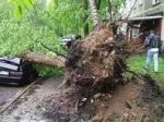 Районные активисты обнаружили, что деревья взамен поваленных ураганом хотят посадить в кварталах под снос