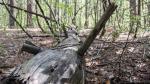 До выборов президента осталось 88 дней: в Челябинске ради эко-парка решили вырубить пятую часть лесного массива