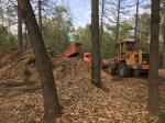 «Сумасшедшие люди убили парк»: в парке МГУ «Большой газон» рубят деревья для подготовки к Чемпионату мира по футболу