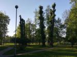 Защитники парков создали интерактивную карту обрубленных деревьев
