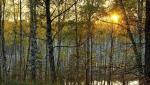 Парк усадьбы Кривякино в подмосковном Воскресенске восстановят к 2019 году