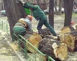"""Реконструкция """"Царицыно"""" заинтересовала прокуроров. Рубка деревьев в парке признана незаконной"""