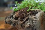 Кирпич-экосистема: индийский исследователь придумал стройматериал из угля и растительного волокна