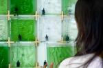 Домашний биореактор на микроводорослях очищает воздух в квартире и производит растительный белок