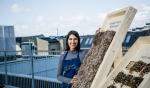 В Дании тестируют изоляционные панели из морских водорослей