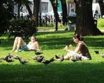 Вместо деревьев – лысый газон. 20% зеленых территорий Москвы оказались фикцией