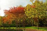 В прямом смысле «зеленое» здравоохранение: вокруг больниц Британии предложено посадить миллион деревьев. Ирландия не отстает