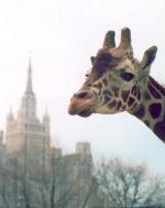 Московский зоопарк станет Подмосковным зоопарком?