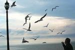 """Почва выдержит, а птицы облетят. Небоскребу """"Газпрома"""" в Лахте стелят соломку где только можно"""