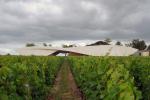 Бетонные волны в виноградниках
