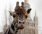 Зоо и против. Иностранные консультанты правительства Москвы предлагают убрать зоопарк из центра города