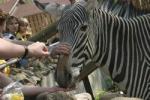 Дошло дело до жирафа. Переедет ли зоопарк с Красной Пресни?