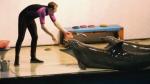 Москвичам дадут возможность поплавать с дельфинами