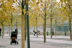 Московские озеленители о цветниках, однолетниках и деревьях в кадках