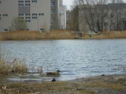Судьбу озера Харовое опять будет решать Рустам Минниханов
