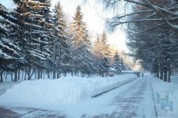 Работа по сохранению и развитию зеленых зон ведется в Новосибирске