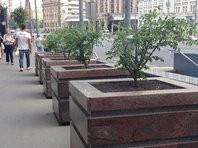 Мониторинг состояния деревьев могут ввести в столице