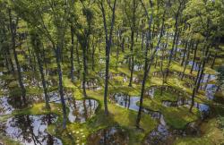 Водный сад в арт-резиденции Art Biotop Nasu