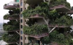 В китайском Чэнду ЖК с вертикальным озеленением оккупировали москиты. Собственникам квартир пришлось отложить новоселье